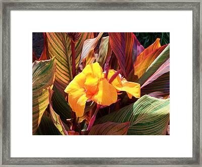 Canna Framed Print by Raymond Robinson