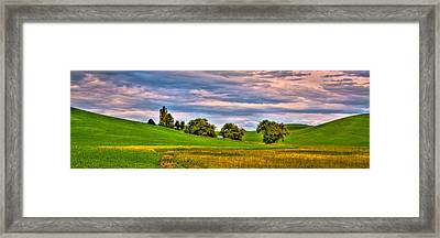 Canola Among The Wheat II Framed Print by David Patterson