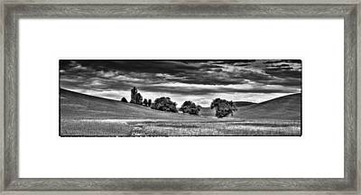 Canola Among The Wheat IIi Framed Print by David Patterson
