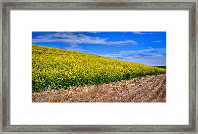 Canola And Stubble Framed Print by David Patterson