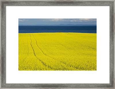 Canola Field, Guernsey Cove, Prince Framed Print by John Sylvester
