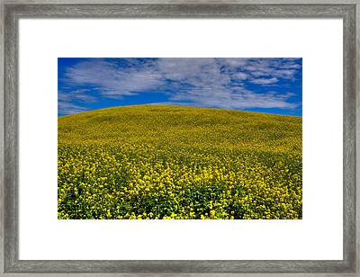 Canola Field In The Palouse Framed Print by David Patterson