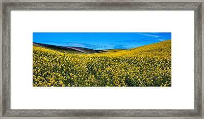 Canola Hills In The Palouse Framed Print by David Patterson