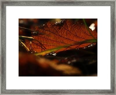 Canopy Framed Print by Odd Jeppesen