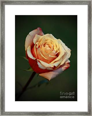 Captivating Moments Framed Print by Inspired Nature Photography Fine Art Photography