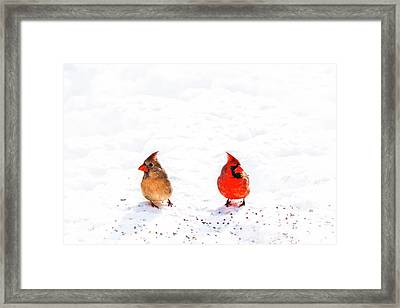 Cardinal Couple II Framed Print by Tamyra Ayles