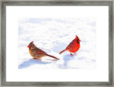 Cardinal Couple Framed Print by Tamyra Ayles