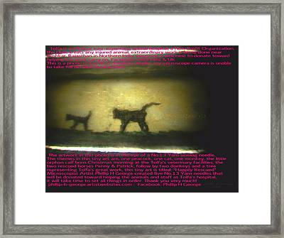 Cat And Monkey Framed Print by Phillip H George