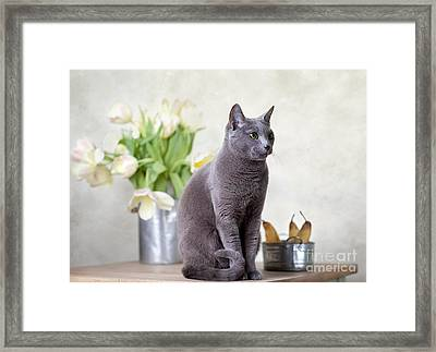 Cat And Tulips Framed Print by Nailia Schwarz