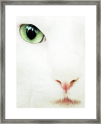 Cat Eye Framed Print by Julie Niemela