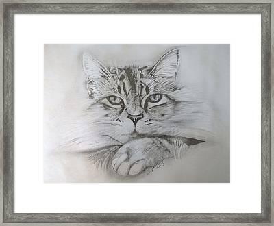 Cat I. Framed Print by Paula Steffensen