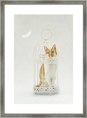 Cat In A Birdcage Framed Print by Catherine MacBride