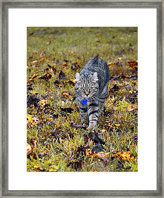 Cat In Autumn Framed Print by Susan Leggett