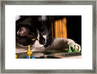 Cat Playing A Game Framed Print by Lori Coleman