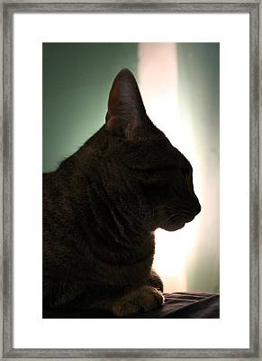 Cat Silhouette Framed Print by Nina Mirhabibi