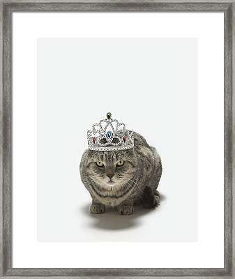 Cat Wearing A Tiara Framed Print by Tim Macpherson