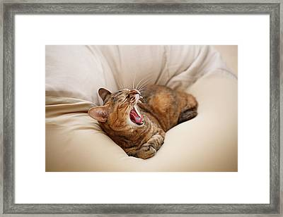Cat Yawn On Bed Framed Print by Junku