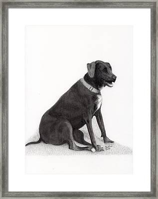 Catahoula Leopard Dog Framed Print by EJ John Baldwin