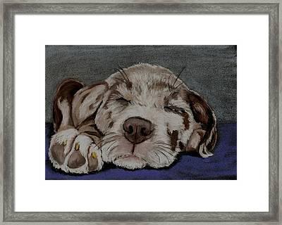 Catahoula Puppy Framed Print by Joan Pye