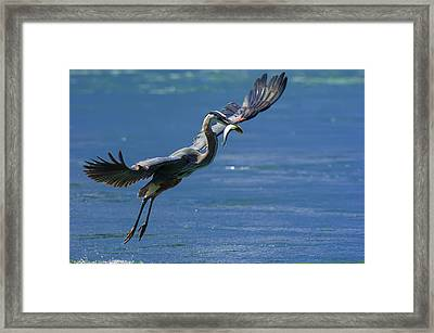 Catch Of The Day Framed Print by Sebastian Musial