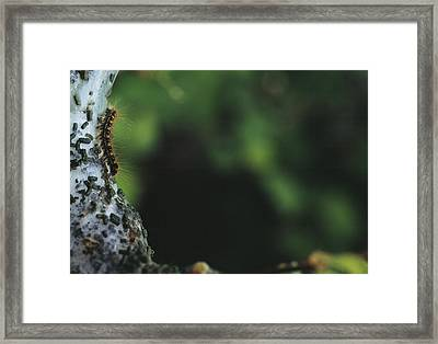 Caterpillar Framed Print by Alan Sirulnikoff