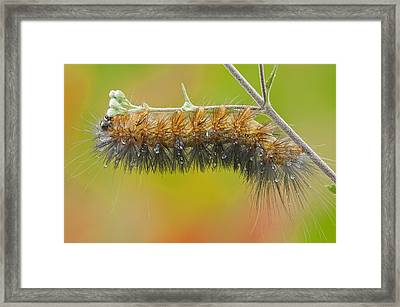 Caterpillar On A Rainy Day Framed Print by Bonnie Barry