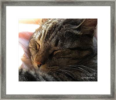 Catnap Framed Print by Dale   Ford
