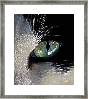 Cat's Eye Framed Print by Dale   Ford