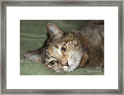 Cats Eyes Framed Print by Michael Waters