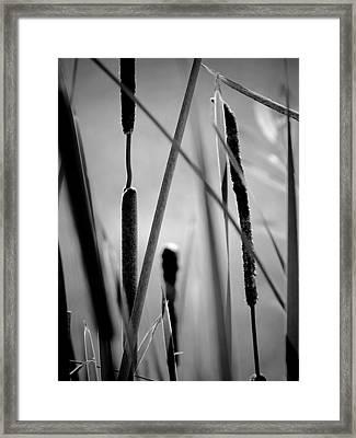 Cattail Shadows Framed Print by Beth Akerman