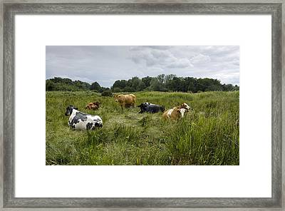 Cattle Grazing In Suffolk Framed Print by Bob Gibbons