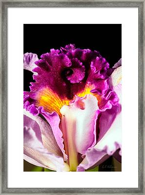 Cattleya II Framed Print by Christopher Holmes