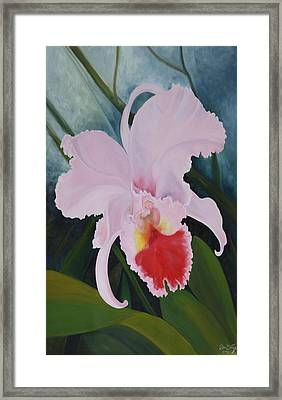 Cattleya Orchid Framed Print by Don  Goetze