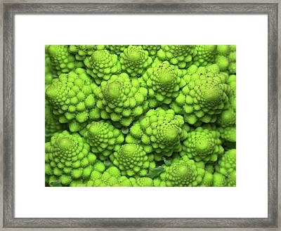 Cauliflower Fractals Framed Print by Mark Watson (kalimistuk)
