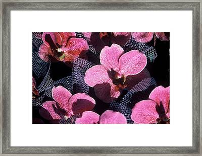 Celebration Framed Print by Alcina Morello