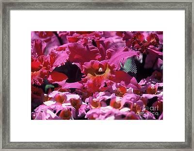 Celebration Too Framed Print by Alcina Morello
