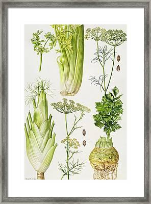 Celery - Fennel - Dill And Celeriac  Framed Print by Elizabeth Rice