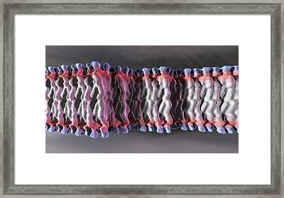 Cell Plasma Membrane Framed Print by Phantatomix