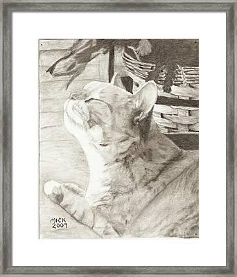 Cepheus Framed Print by Mick Hogan