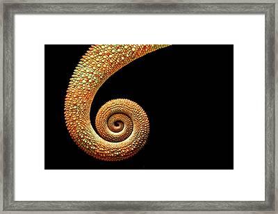 Chameleon Tail Framed Print by MarkBridger