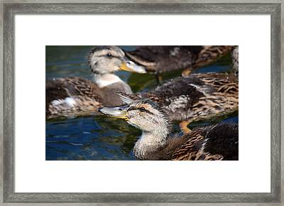 Changing Directions Framed Print by Fraida Gutovich