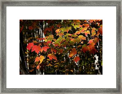 Changing Of The Colors Framed Print by Rich Franco