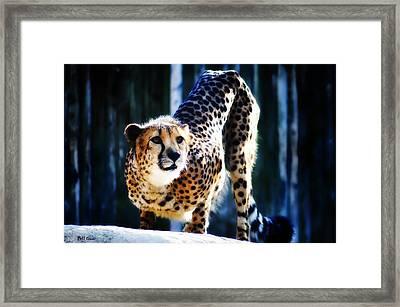Cheeta Framed Print by Bill Cannon