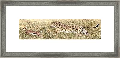 Cheetah And Gazelle Fawn Framed Print by Tim McCarthy