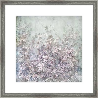 Cherry Blossom Grunge Framed Print by Paul Grand