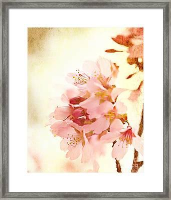 Cherry Blossom Framed Print by Kim Fearheiley