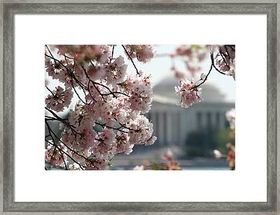 Cherry Blossom Washington Framed Print by Valia Bradshaw