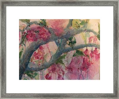 Cherry Blossoms Framed Print by Sandy Collier