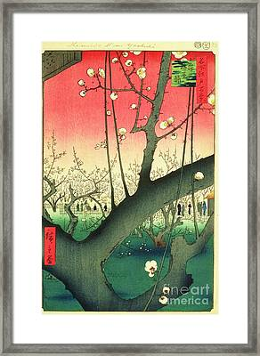 Cherry Blossoms Framed Print by Roberto Prusso