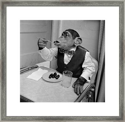 Cherry Chimp Framed Print by Vecchio